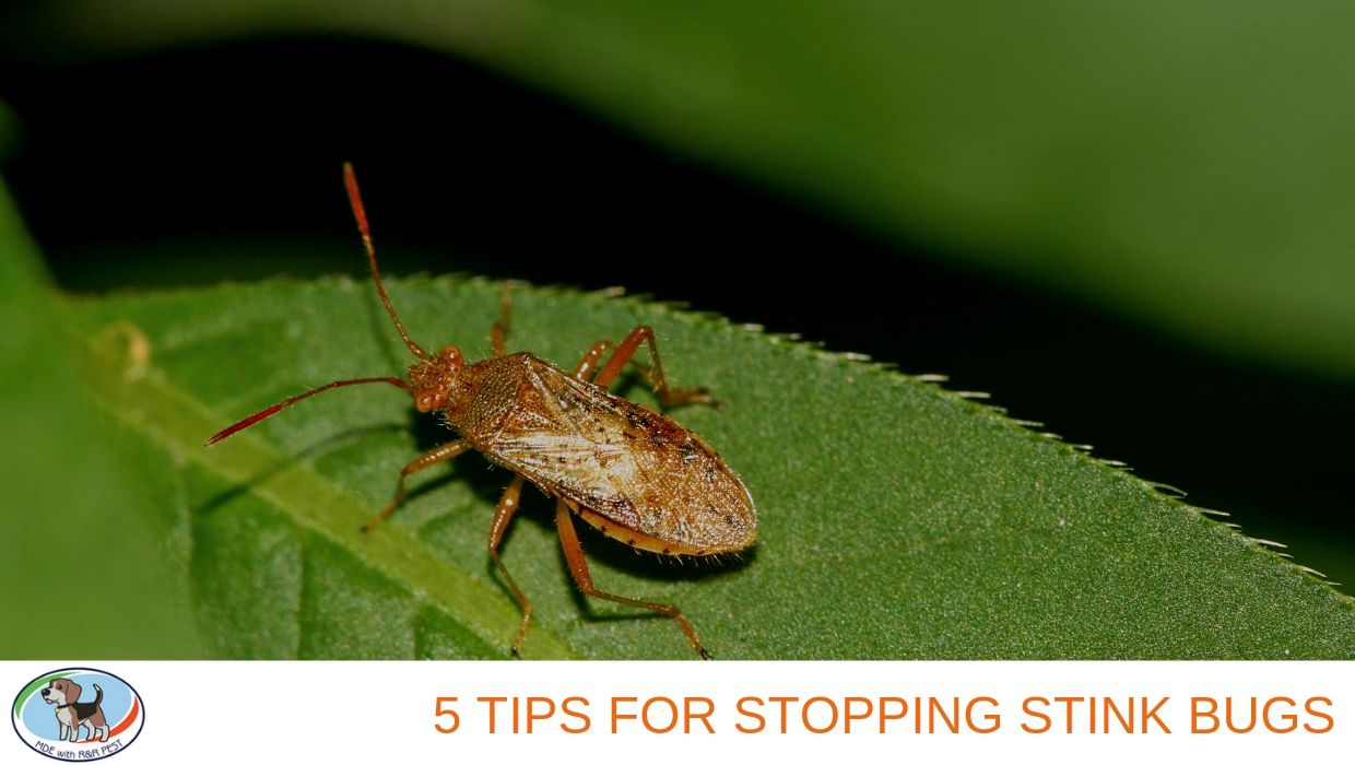 5 Tips for Stopping Stink Bugs