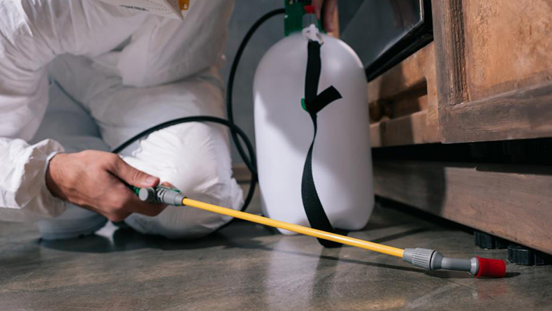 How MDE Pest Control Can Protect Your Home Against Termites in 2019