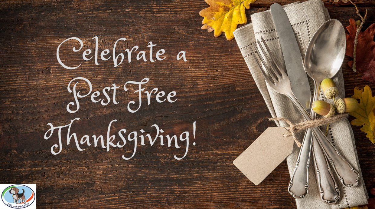 Celebrate a Pest Free Thanksgiving