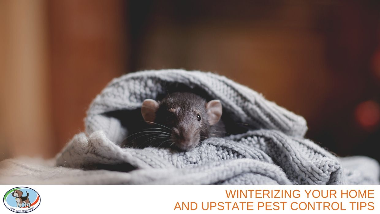 Winterizing Your Home and Upstate Pest Control Tips