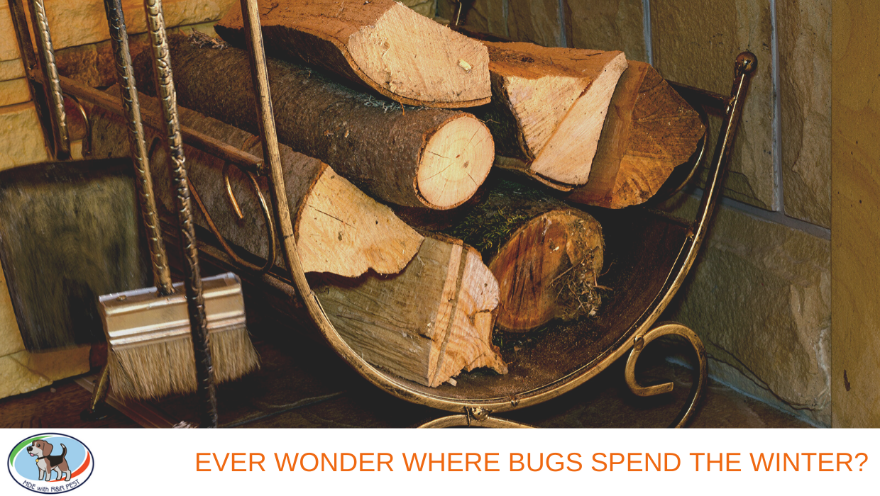 Ever Wonder Where Pests Spend the Winter?