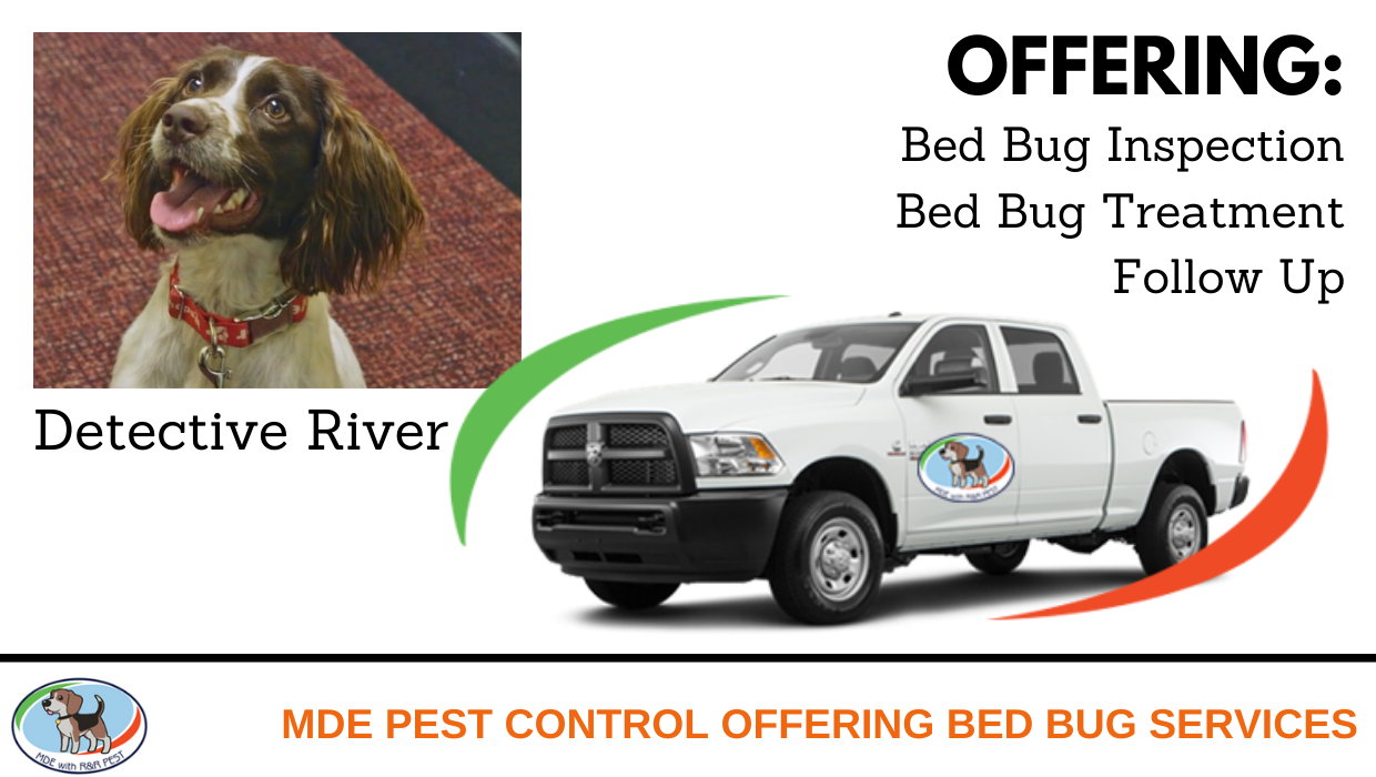 Bed Bug Services Mde Pest Control